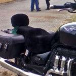 Triumph Rocket iii Roadster 2006 Black Sheepskin Motorcycle Seat Cover