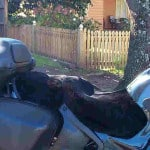 BMW R1100RT 1995 Black Sheepskin Motorcycle Seat Cover