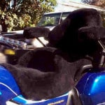 Honda GL1800 2000 Black Sheepskin Motorcycle Seat Cover