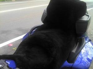 Can Am Spyder RT + Pillion Backrest 2010 Black Sheepskin Motorcycle Seat Cover
